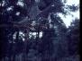 1967-03-01-opkomst-verkenners