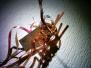 2003-12-20-uitstuif-hawaii-welpen