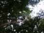 2004-09-25-vette-hazen-en-boom-verkenners