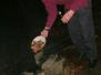 2005-01-21-koning-januari-dag-stam