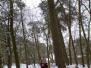 2005-03-05-sneeuwpret-rowans