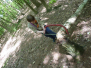 2010-05-22-hakken-en-zagen-verkenners