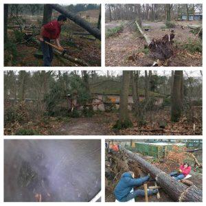 Bosbouw rowans ruimen stormschade op