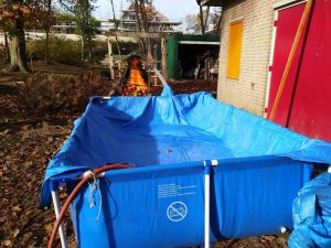 Welpen Impeesa hot tub in wording