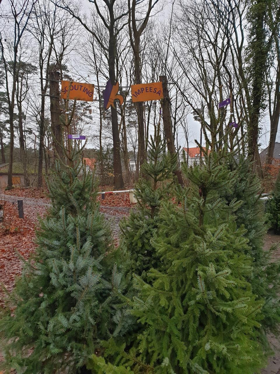Scouting Impeesa Amersfoort - duurzame kerstbomen